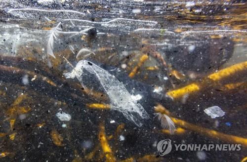 각종 플라스틱과 쓰레기로 오염된 바다