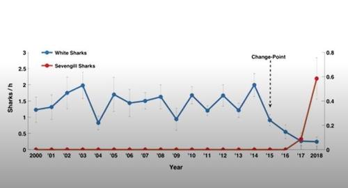 백상아리(청색)과 칠성상어(빨간색) 관측 시간 비교