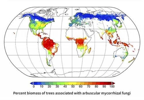 내생균근균 공생 수목 분포도