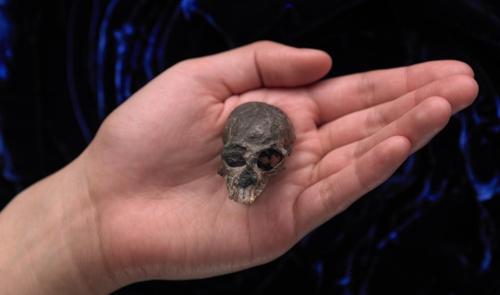 칠레 안데스 산맥에서 발굴된 2천만년 전 영장류 '칠레세부스' 화석