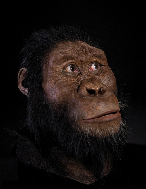MRD 화석을 토대로 복원한 A.아나멘시스 얼굴