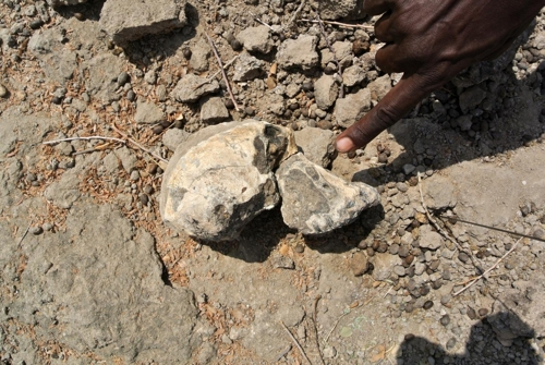 MRD 두개골 화석