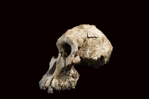 비교적 온전한 형태로 발굴된 MRD 화석