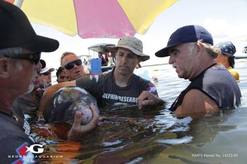 야생 큰돌고래를 살펴보는 연구진