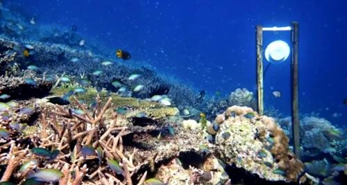 죽은 산호초 주변에 건강한 산호초 소리를 들려주기 위해 설치한 수중 스피커