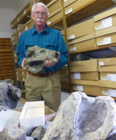카루 분지에서 발굴된 '리스트로사우루스' 두개골 화석