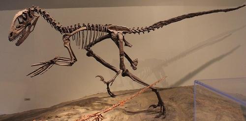필드 자연사박물관에 전시된 데이노니쿠스