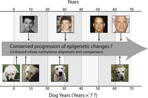 생리적 변화 vs 후성유전적 변화