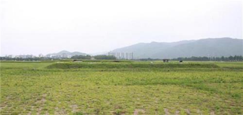황룡사 중문지 현재 모습