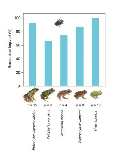 개구리 종과 콩알물땡땡이 생존률