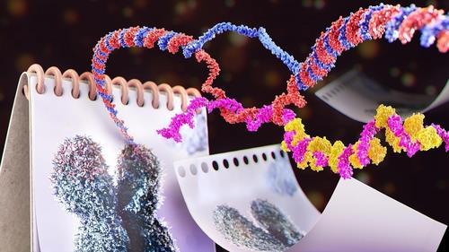 비암호 RNA(TERRA)의 텔로미어 축적 과정을 보여주는 그래픽