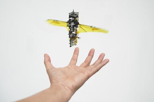 충돌해도 추락하지 않는 곤충 모방 날갯짓 비행로봇