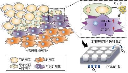 3차원 배양세포 모델