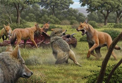 1만5천 년 전 다이어 울프 상상도