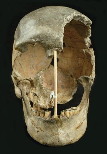 4만5천년 이전의 여성 두개골 화석 '즐라티 쿤'