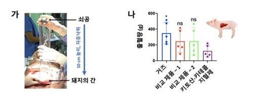 동물모델 대상 지혈 효과 실험