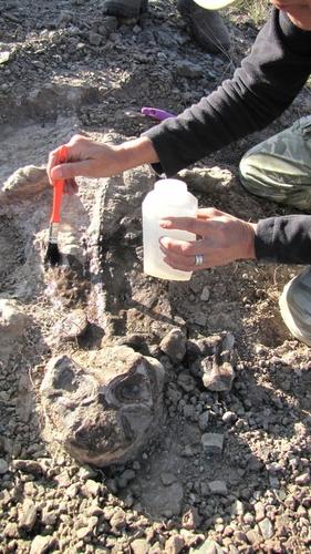 리스트로사우루스 화석 발굴 현장