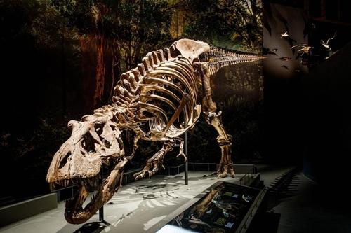 네덜란드 자연사박물관 생물다양성센터에 전시 티라노사우루스 화석 '트릭스'