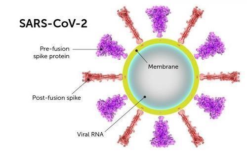 신종 코로나의 스파이크 단백질 구조