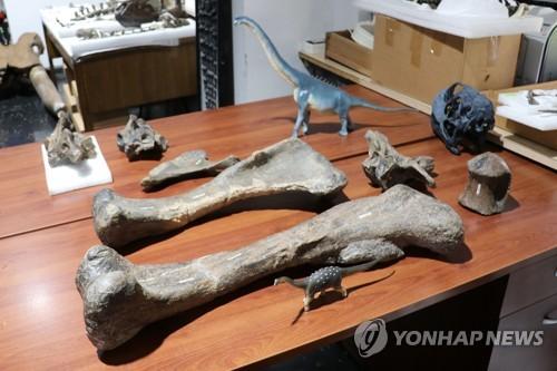 칠레 아타카마 사막서 발견된 초식공룡 뼈 화석