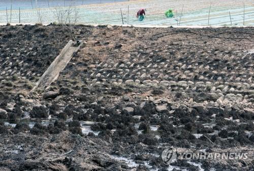 산불에 봄을 빼앗긴 강원 산골 마을